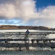 shellfish farming A proud tradition