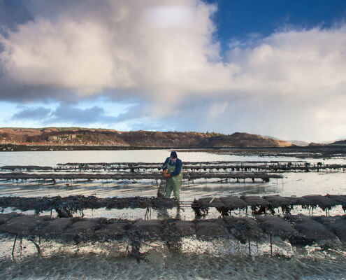 shellfish farming A proud tradition