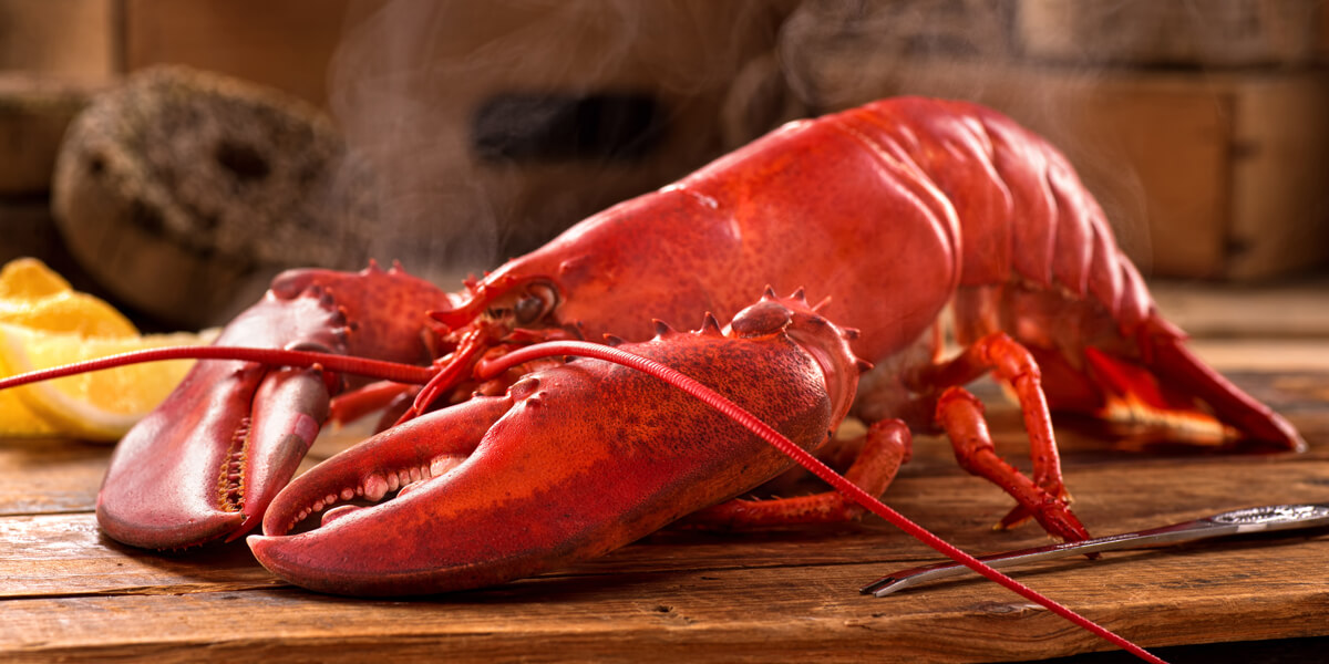 Get ready for our new season Maine lobster! - Scottish ...